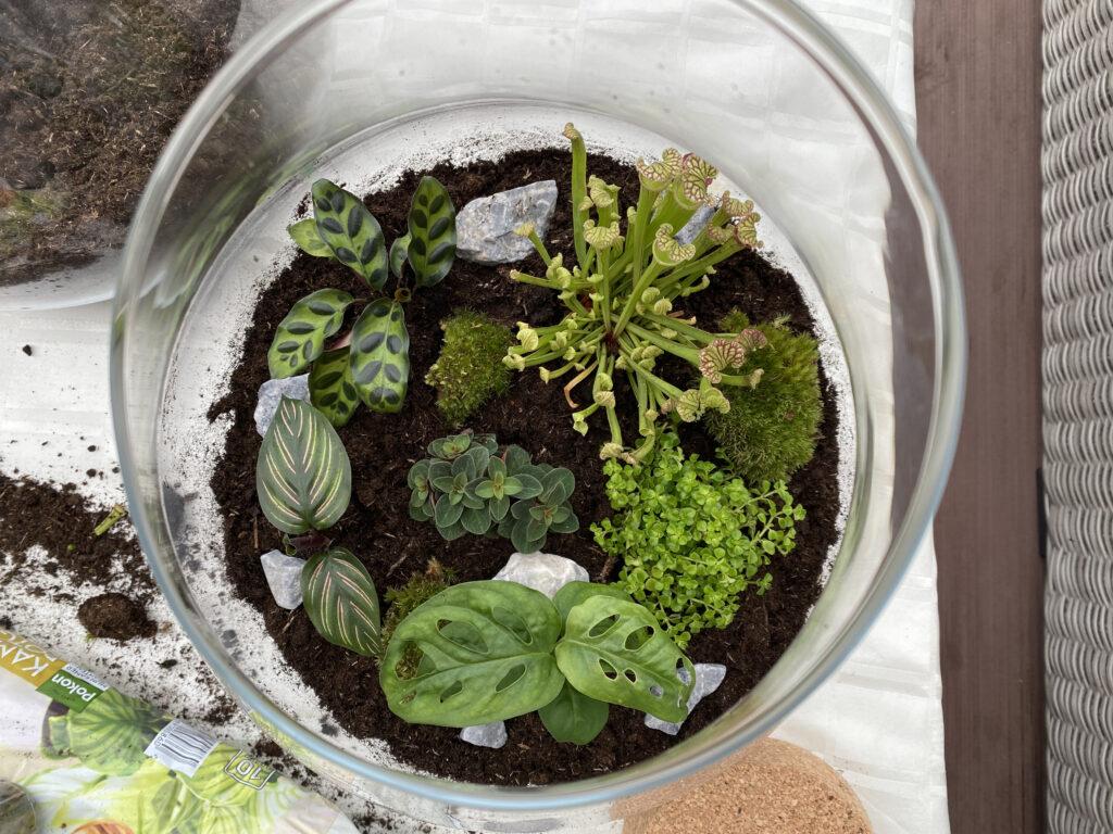 planten-terrarium-binnenkant