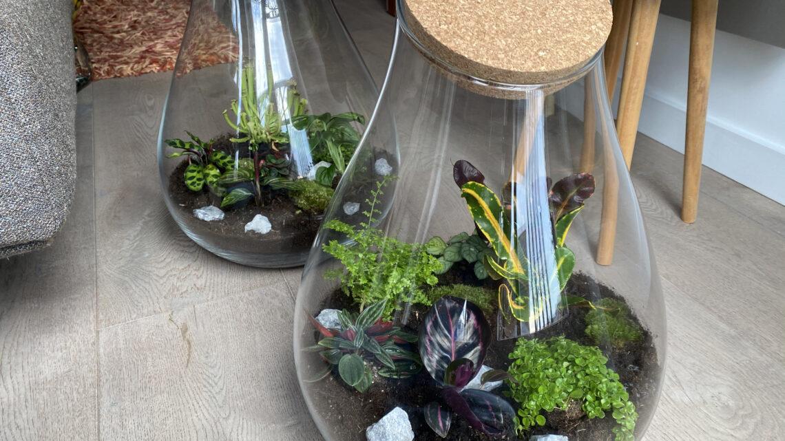 DIY: zelf een planten terrarium maken